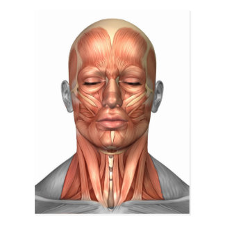 Anatomy Of Human Face And Neck Muscles, Front Postcard
