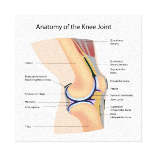 Anatomy of human knee joint canvas print