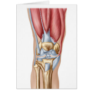 Anatomy Of Human Knee Joint Card