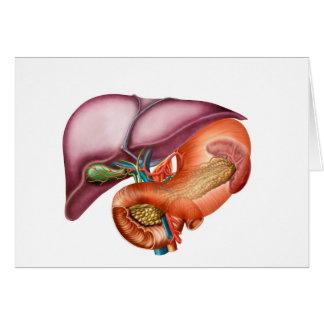Anatomy Of Liver, Antero-Visceral View Card