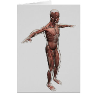 Anatomy Of Male Muscular System, Side View 4 Card