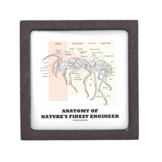 Anatomy Of Nature's Finest Engineer (Worker Ant) Jewelry Box
