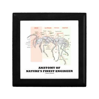 Anatomy Of Nature's Finest Engineer (Worker Ant) Keepsake Box