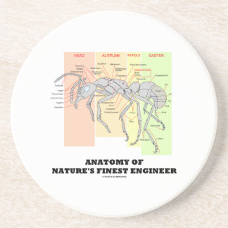 Anatomy Of Nature's Finest Engineer (Worker Ant) Sandstone Coaster