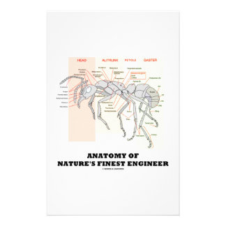 Anatomy Of Nature's Finest Engineer (Worker Ant) Custom Stationery