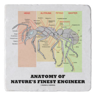 Anatomy Of Nature's Finest Engineer Worker Ant Trivet