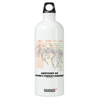Anatomy Of Nature's Finest Engineer (Worker Ant) Water Bottle