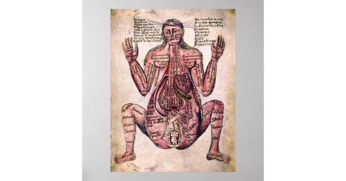 Anatomy Of Pregnant Woman C 14 Century Poster Zazzle