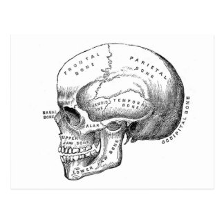 Anatomy of Skull Postcard