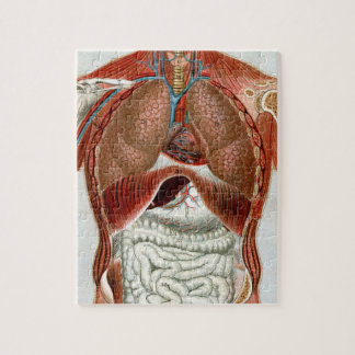 Anatomy of the Human Body Jigsaw Puzzle
