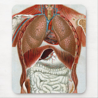 Anatomy of the Human Body Mouse Pad
