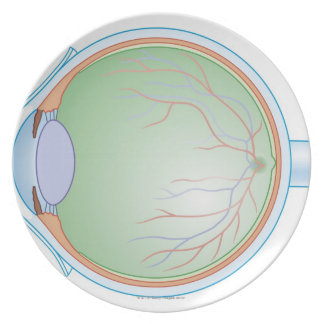 Anatomy of the Human Eye Melamine Plate