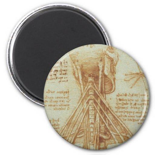 Anatomy of the Neck by Leonardo Da Vinci c. 1515 2 Inch Round Magnet