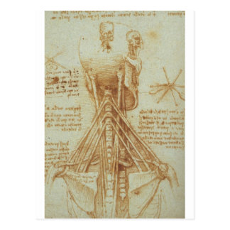 Anatomy of the Neck by Leonardo Da Vinci c. 1515 Postcard