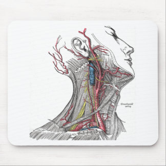 Anatomy of the Neck Mouse Pad