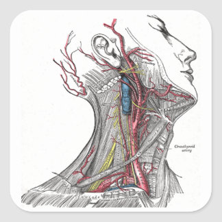 Anatomy of the Neck Square Sticker