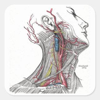 Anatomy of the Neck Sticker