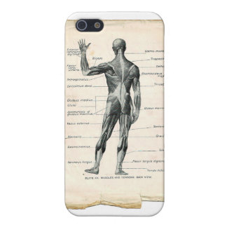 Anatomy Posterior iPhone SE/5/5s Case
