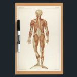 "Anatomy Posterior Vintage Drawing Dry-Erase Board<br><div class=""desc"">This just might be the perfect dry erase board for your massage space,  yoga studio,  or reiki center.</div>"