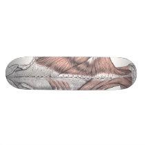 Anatomy Skateboard Deck