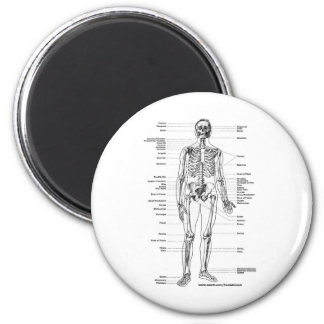 ANATOMY SKELETON T-SHIRTS AND GIFTS MAGNET