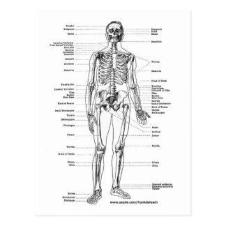 ANATOMY SKELETON T-SHIRTS AND GIFTS POSTCARD
