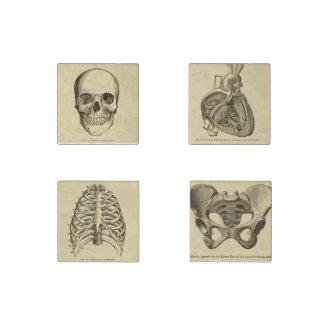 Anatomy Stone Magnets