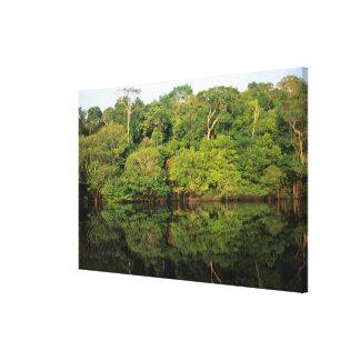 Anavilhanas, Amazonas, Brazil. Rainforest river Canvas Print