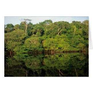 Anavilhanas, Amazonas, Brazil. Rainforest river Card