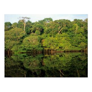 Anavilhanas, Amazonas, Brazil. Rainforest river Postcard