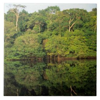 Anavilhanas, Amazonas, el Brasil. Río de la selva  Azulejo Cuadrado Grande