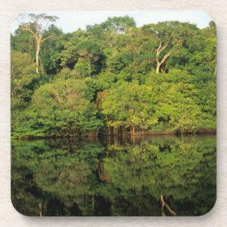 Anavilhanas, Amazonas, el Brasil. Río de la selva  Posavasos De Bebida