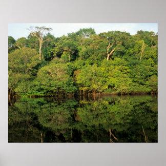 Anavilhanas, Amazonas, el Brasil. Río de la selva  Póster
