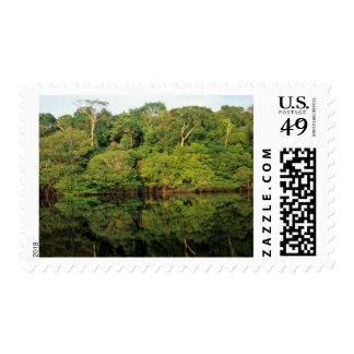 Anavilhanas, Amazonas, el Brasil. Río de la selva Timbres Postales