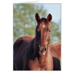 ANB Gotalil Gumption Greeting Card