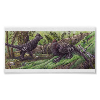 Anchiornis: Dimorphism Print