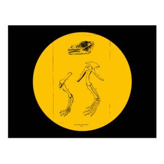 Anchisaurus Colurus Postales