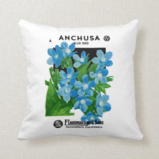 Anchusa Almohada