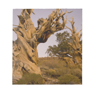 Ancient Bristlecone Forest, White Mountains, CA Note Pad