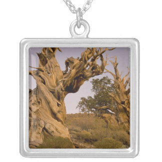 Ancient Bristlecone Forest, White Mountains, CA Silver Plated Necklace