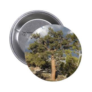 Ancient BristleCone Pine Tree Pinback Button