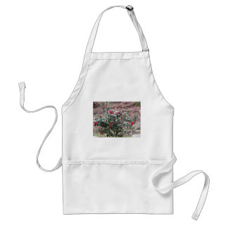 Ancient cultivar of Camellia japonica flower Adult Apron