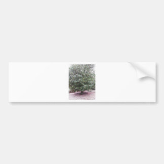Ancient cultivar of Camellia japonica flower Bumper Sticker