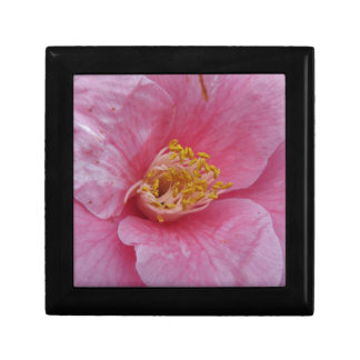 Ancient cultivar of Camellia japonica flower Gift Box