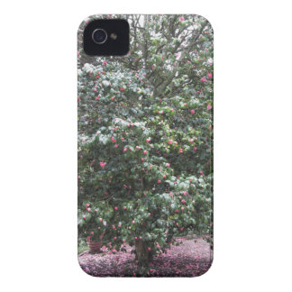 Ancient cultivar of Camellia japonica flower iPhone 4 Cover