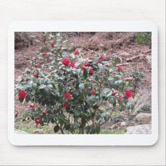 Ancient cultivar of Camellia japonica flower Mouse Pad