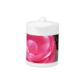 Ancient cultivar of Camellia japonica flower Teapot