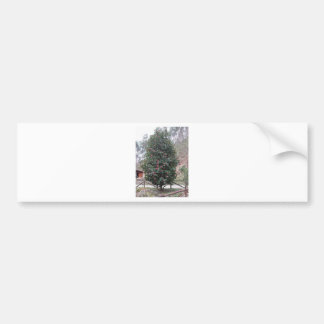 Ancient japanese cultivar of Camellia japonica Bumper Sticker