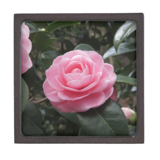 Ancient japanese cultivar of Camellia japonica Keepsake Box