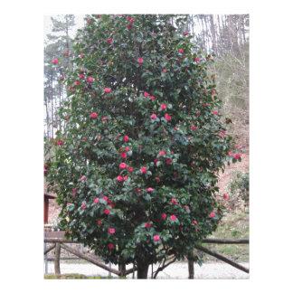 Ancient japanese cultivar of Camellia japonica Letterhead